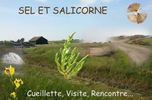 Sel et Salicorne